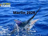 Marlin in 2020